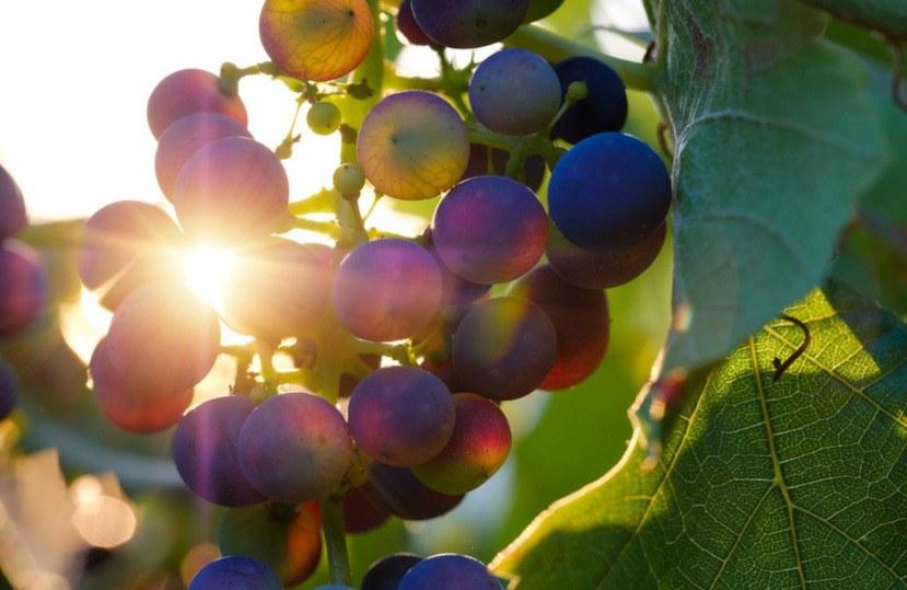 Wijnen met oorsprongsbenaming Empordà